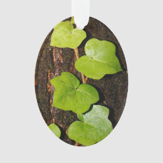 Azores endemic hedera ornament