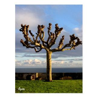 Azores Postcard-Ermida da mae de Deus Postcard