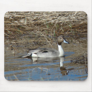 B0005 Pintail Duck Mouse Pad