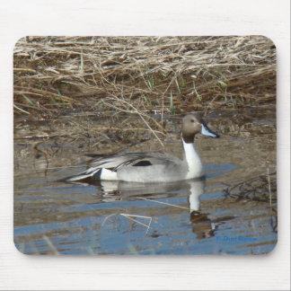 B0005 Pintail Duck Mousepads