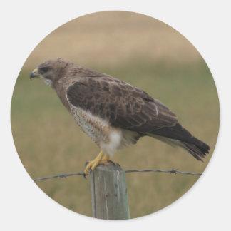 B0010 Swainsons Hawk Classic Round Sticker