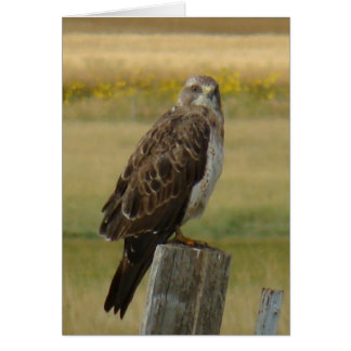 B0033 Swainson's Hawk Card