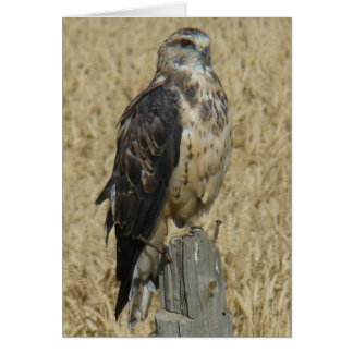 B0035 Ferruginous Hawk Card