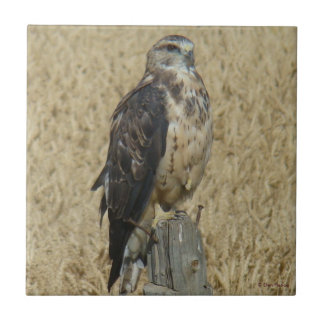 B0035 Ferruginous Hawk Ceramic Tile