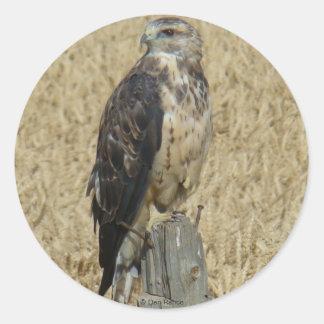B0036 Ferruginous Hawk Classic Round Sticker