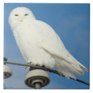 B0050 Snowy Owl Ceramic Tile