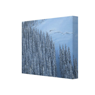 B.C. Mountain Snow Gallery Wrapped Canvas