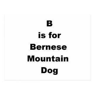 b is for bernese mountain dog postcard