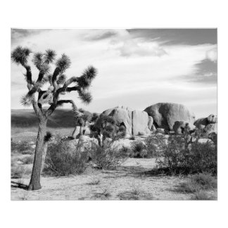 B&W Joshua Tree National Park Photo