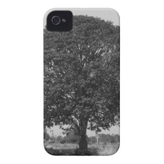 B&W Mango Tree iPhone 4 Case