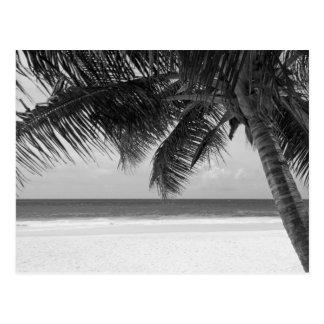 B&W Palm 7 Postcard