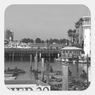 B&W Pier 39 Sea Lions Square Sticker