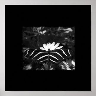 B&W Zebra Butterfly on Black Poster