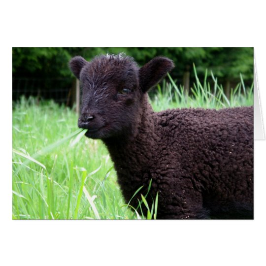 BaaBaa Black Sheep Note Card