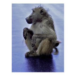 Baboon Sitting Postcard