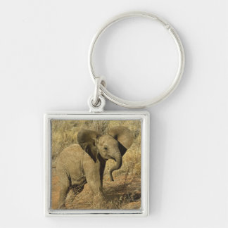 Baby African Elephant, Loxodonta Africana, Silver-Colored Square Key Ring