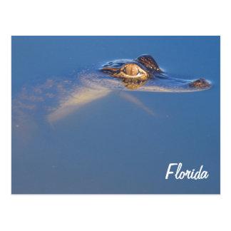 Baby Alligator Postcard