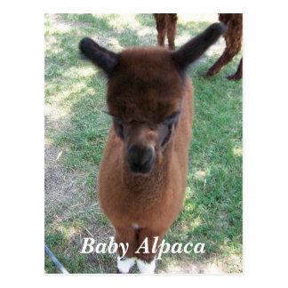 Baby Alpaca Gena Postcard