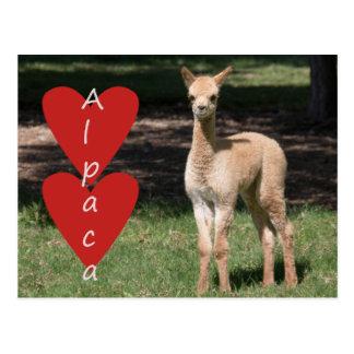 Baby alpaca love postcard
