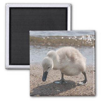 Baby Animal Swan Magnet