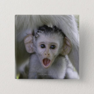 Baby baboon underneath its mother 15 cm square badge