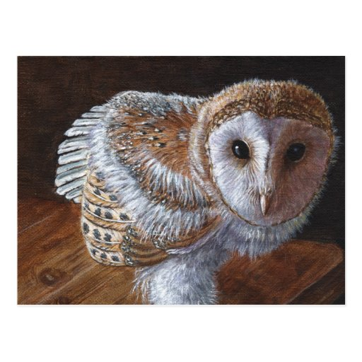 Baby Barn Owl Bird Postcards