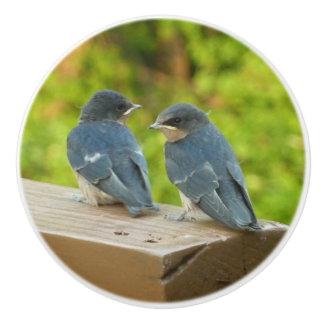 Baby Barn Swallows Nature Bird Photography Ceramic Knob