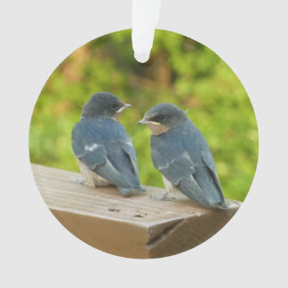 Baby Barn Swallows Nature Bird Photography Ornament