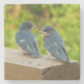 Baby Barn Swallows Nature Bird Photography Stone Coaster
