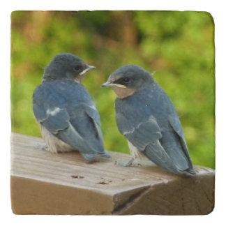 Baby Barn Swallows Nature Bird Photography Trivet