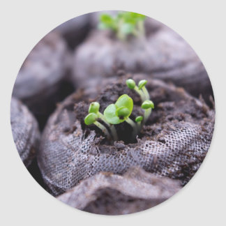 Baby Basil Plant Classic Round Sticker