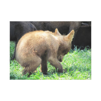Baby Bear Strolling Stretched Canvas Print