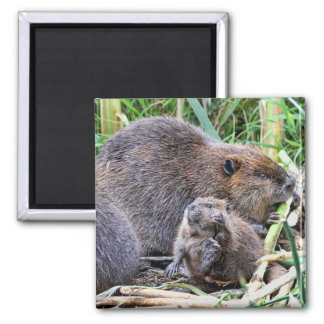 Baby Beaver and Family Photo Square Magnet