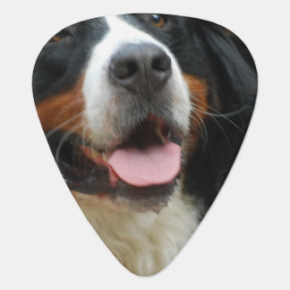 Baby Bernese Mountain Dog Plectrum