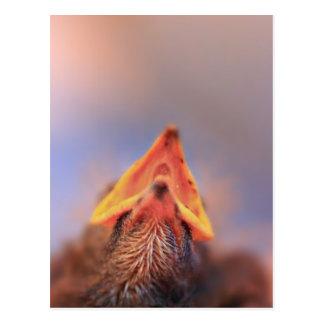 Baby Bird 2 Postcards