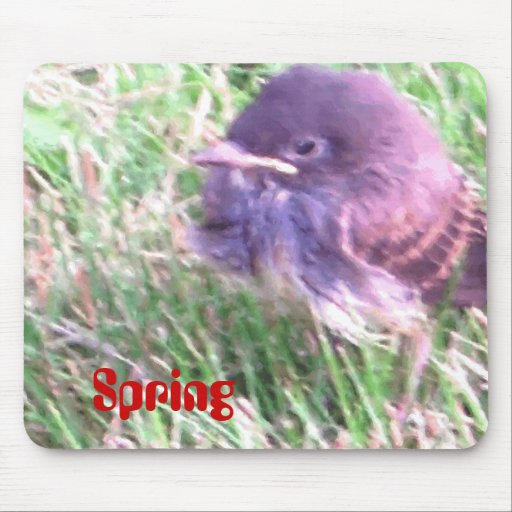 Baby Bird In Spring Mouse Pads