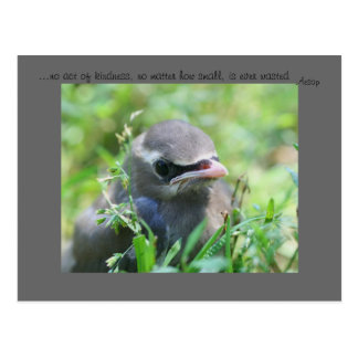 Baby Bird Inspirational Kindness Quote Postcard