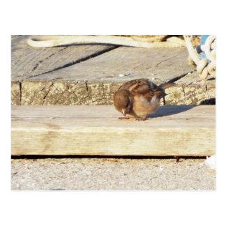 Baby bird on the docks postcard