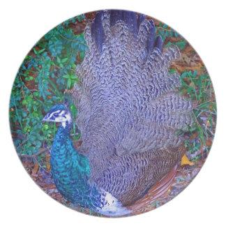 Baby Bird Plate