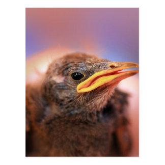 Baby Bird Postcards