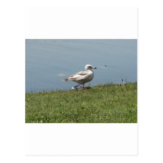 baby bird post card