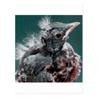 baby bird postcard