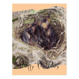 Baby Birds 1 Post Card