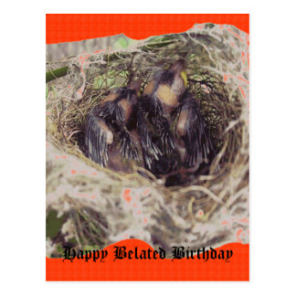 Baby Birds 1 Postcard