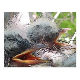 Baby birds in a nest postcard