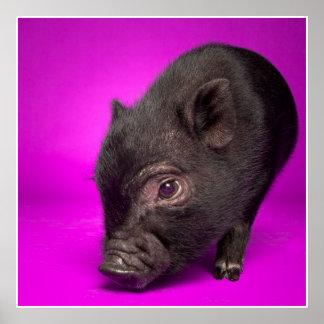 Baby Black Pig Print