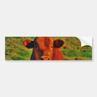 BABY BROWN COW EATING BUMPER STICKER