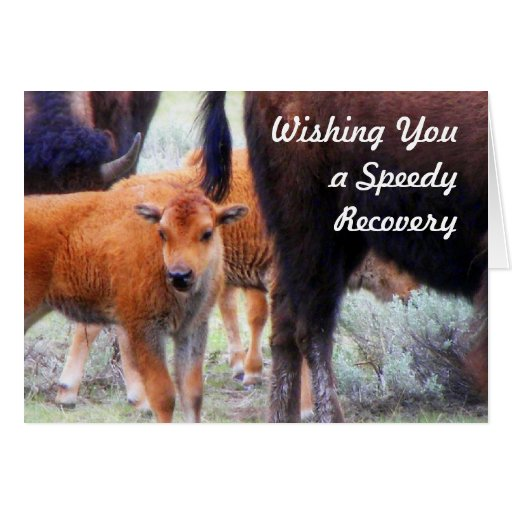 Baby Buffalo - Get Well- Speedy Recovery Card
