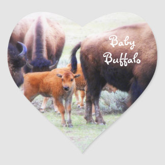 Baby Buffalo in Yellowstone Natl. Park - Sticker