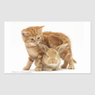 Baby Bunny and Orange Kitten Meet Rectangular Sticker